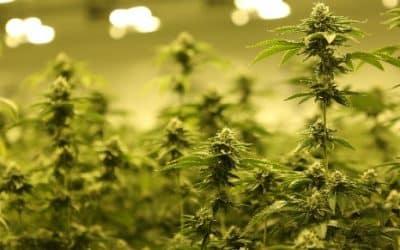 Can Cannabis Help My Anxiety?