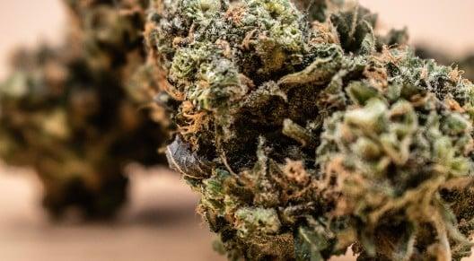 Cannabis Terpenes 101