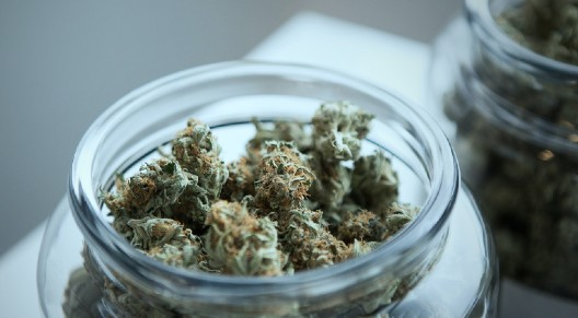 Interesting Facts About Cannabis